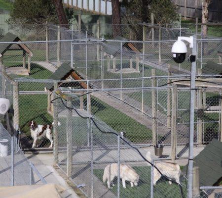 canine accommodation melbourne